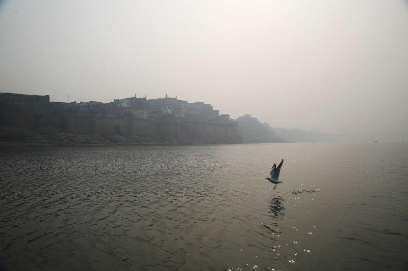 vns ramnagar boat seagull