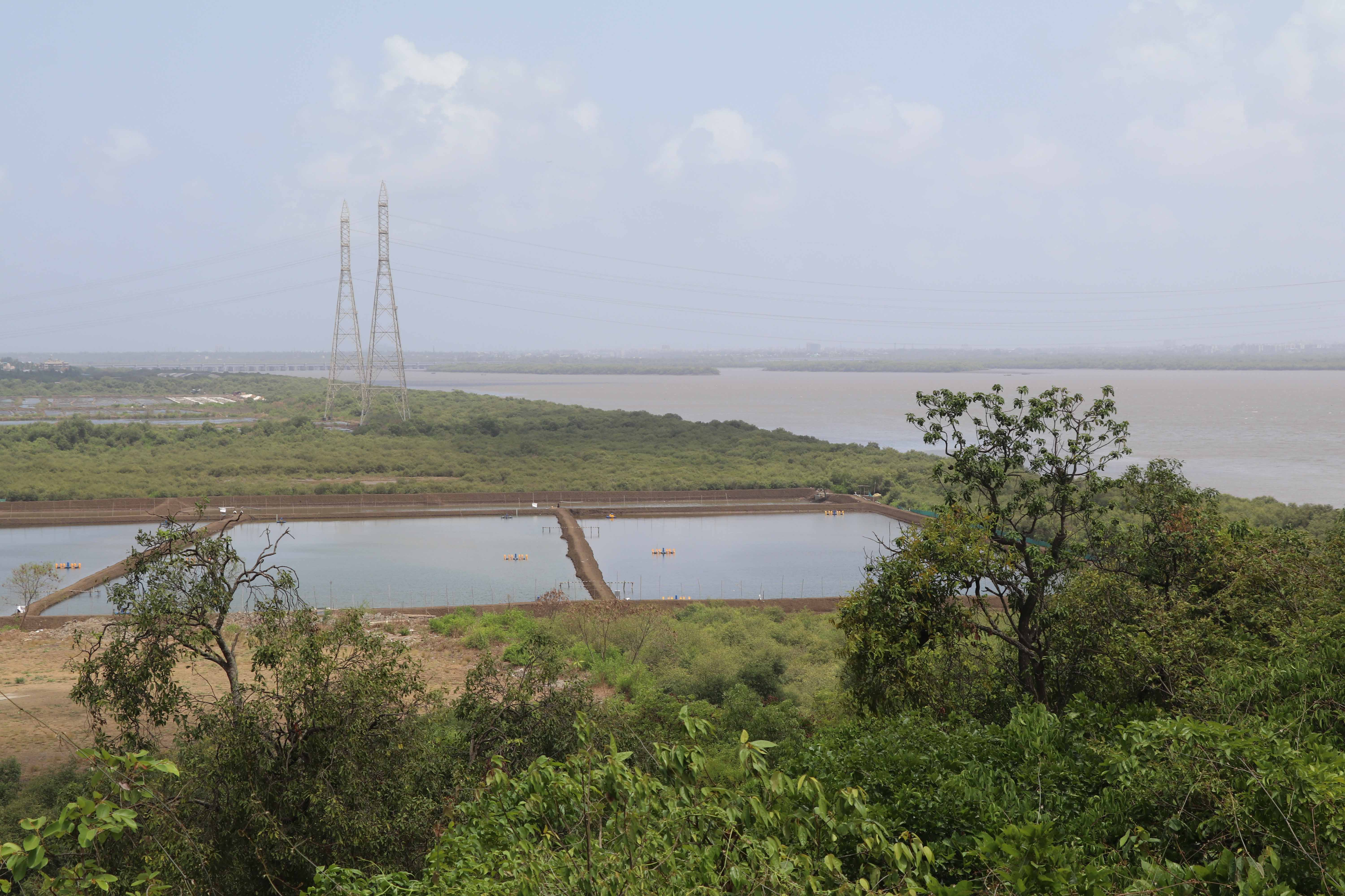 vasai creek